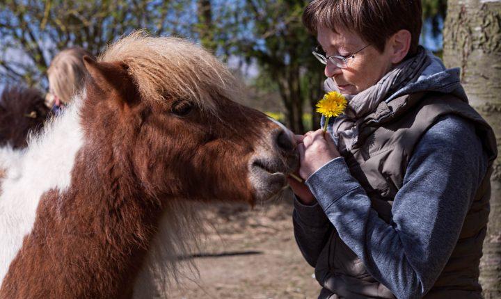 Die seelische Gesundheit zurück gewinnen • Mensch durch Pferd