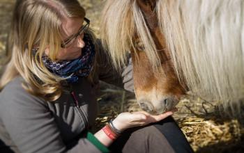 Ausbildung Pferde In Der Therapie