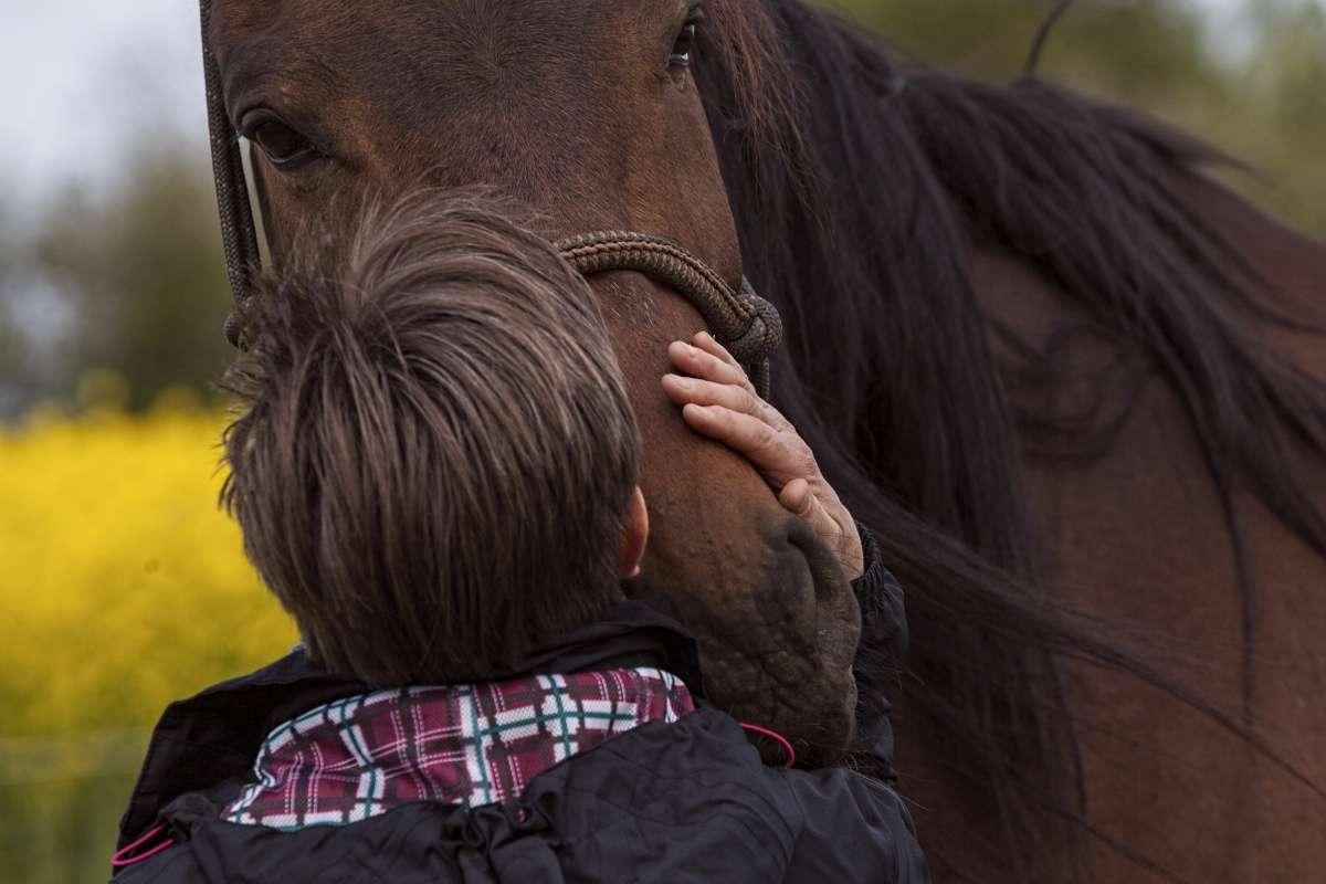 Therapie Mit Pferden Bei Depressionen