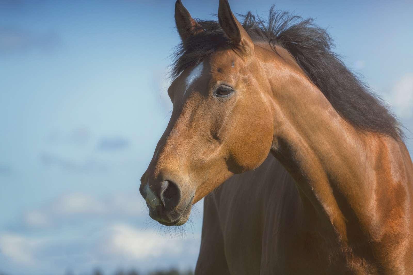 Pferde Als Trainer Und Therapeuten
