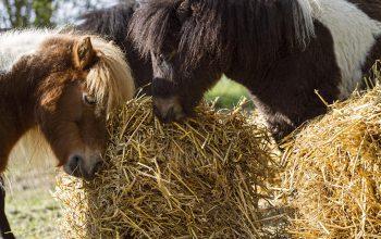 Therapie Mit Pferden Bei Magersucht