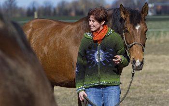 Erfolgscoaching Mit Pferden