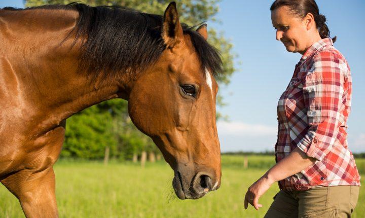 Coaching Mit Pferden Bei Niedrigem Selbstbewusstsein